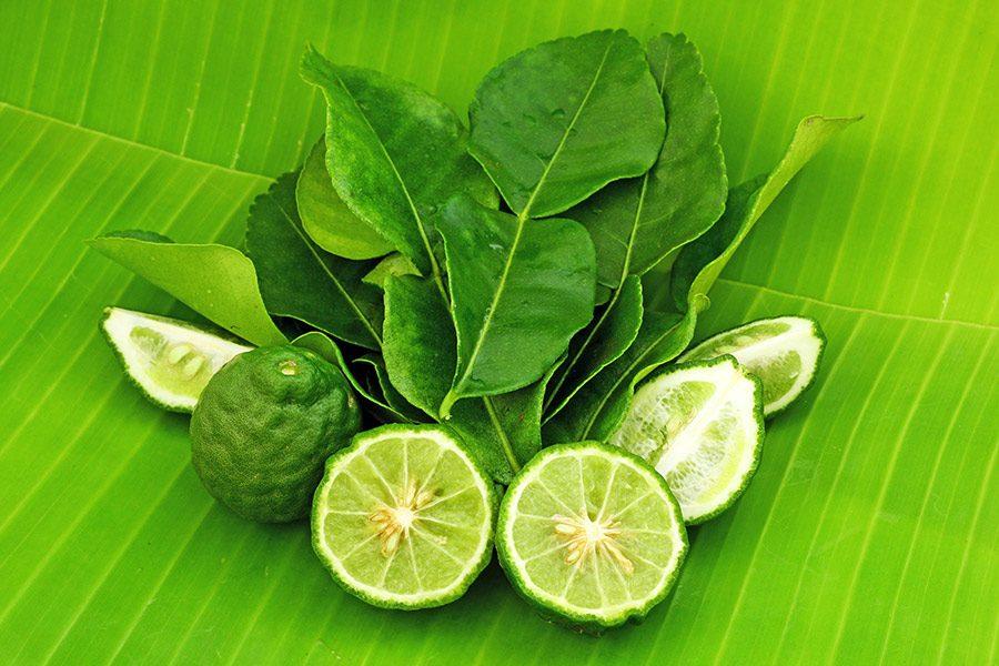 La lime kaffir, ce fruit séduisant et parfumé